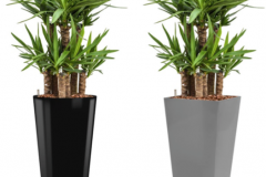 Yucca Elephantipes black round:anthracite square